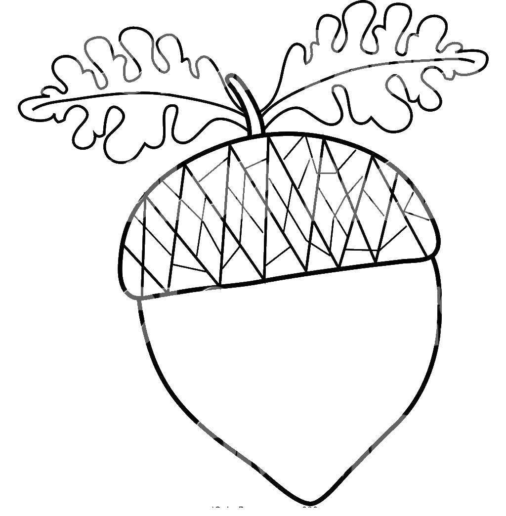 раскраски орех раскраска орех дуба контуры листьев деревьев