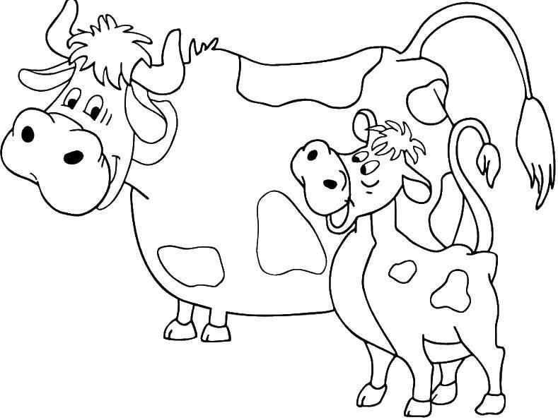 Раскраска Корова мурка, и теленок гаврюша Скачать корова мурка, теленок гаврюша.  Распечатать ,раскраски простоквашино,