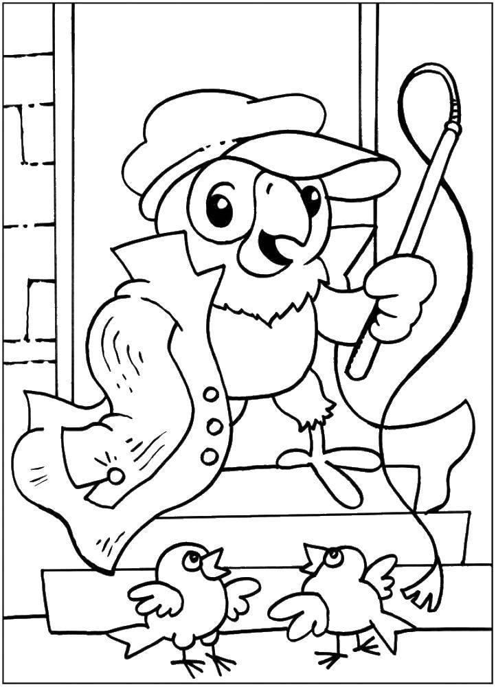 Раскраска раскраски попугай кеша Скачать Птицы, петушок.  Распечатать ,домашние животные,