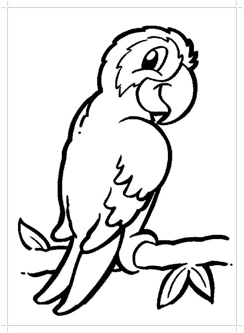 Раскраска Попугай Скачать попугай.  Распечатать ,раскраски попугай кеша,