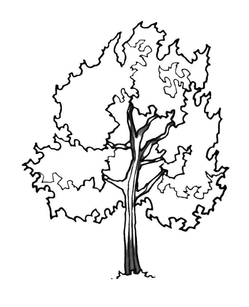 Раскраска дерево Скачать единорог, пони.  Распечатать ,Радуга,