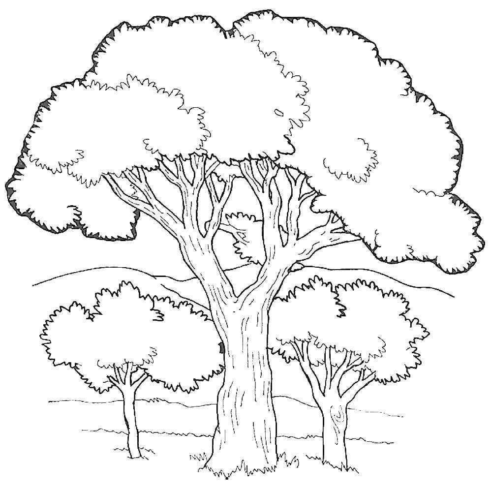 Раскраска дерево Скачать Зима, лес, веселье, снег.  Распечатать ,зима,