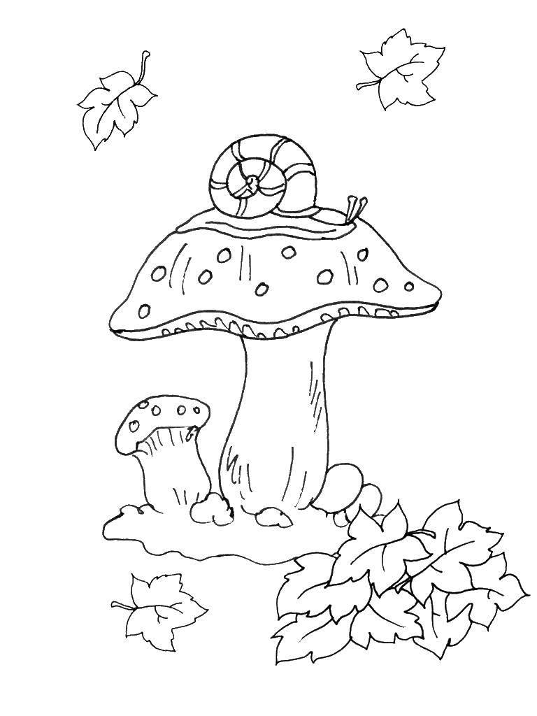 Раскраска грибы Скачать ,фигуры, узоры, звездочки,.  Распечатать