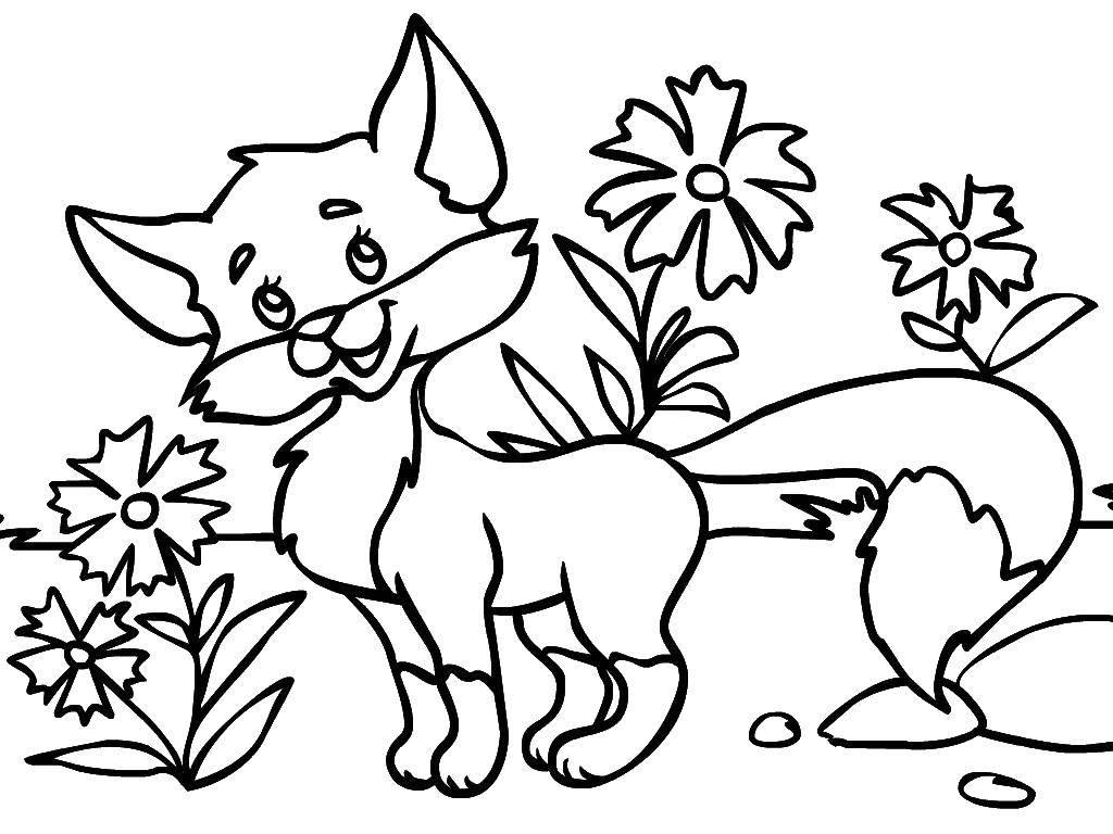 Раскраска Животные Скачать щенки, бабочки, корзина, косточки.  Распечатать ,собаки,