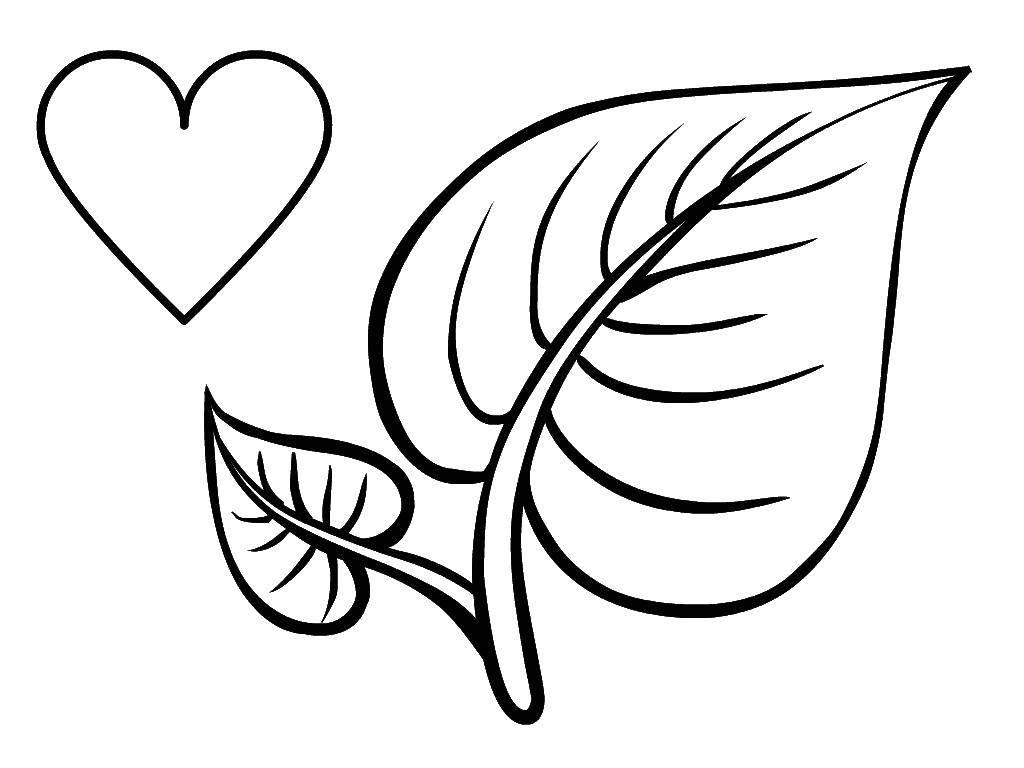 Раскраска Листок и сердце Скачать Фигура, геометрическая.  Распечатать ,фигуры,