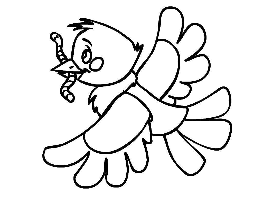 Раскраска птицы Скачать Спорт, гимнастика.  Распечатать ,гимнастика,