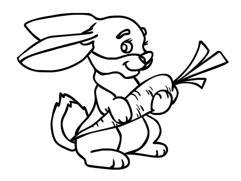 Раскраска Зайка с морковкой Скачать Животные, зайчик.  Распечатать ,Животные,