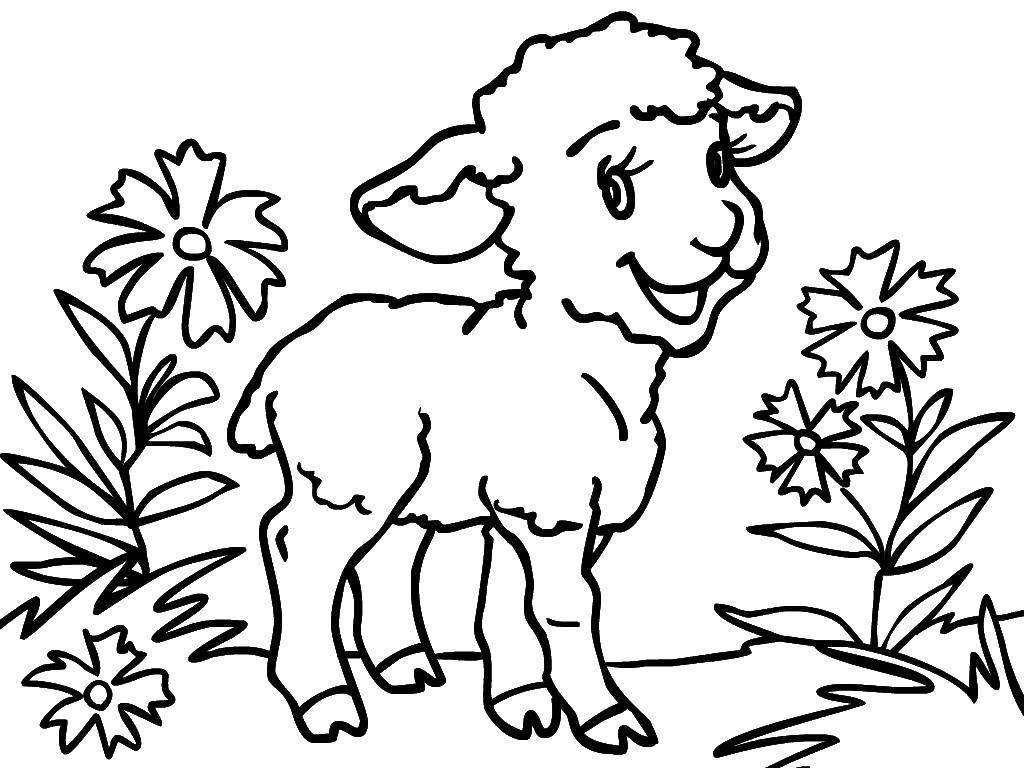 Изучаем цвета с ребенком. Бесплатные раскраски животных