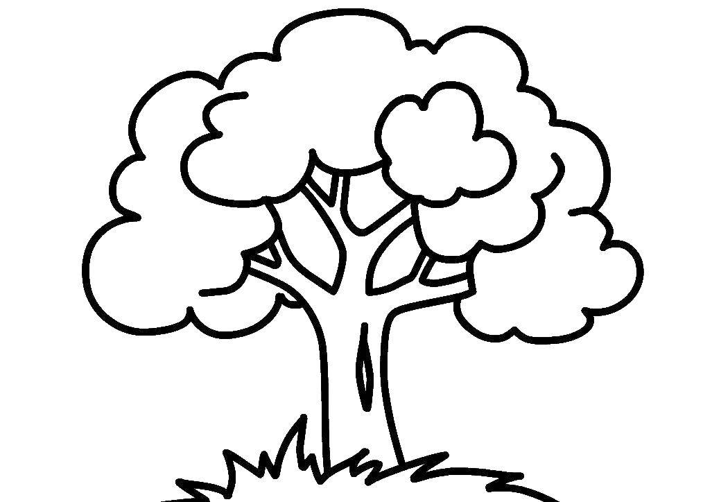 Раскраска Деревце Скачать Деревья, лист.  Распечатать ,дерево,