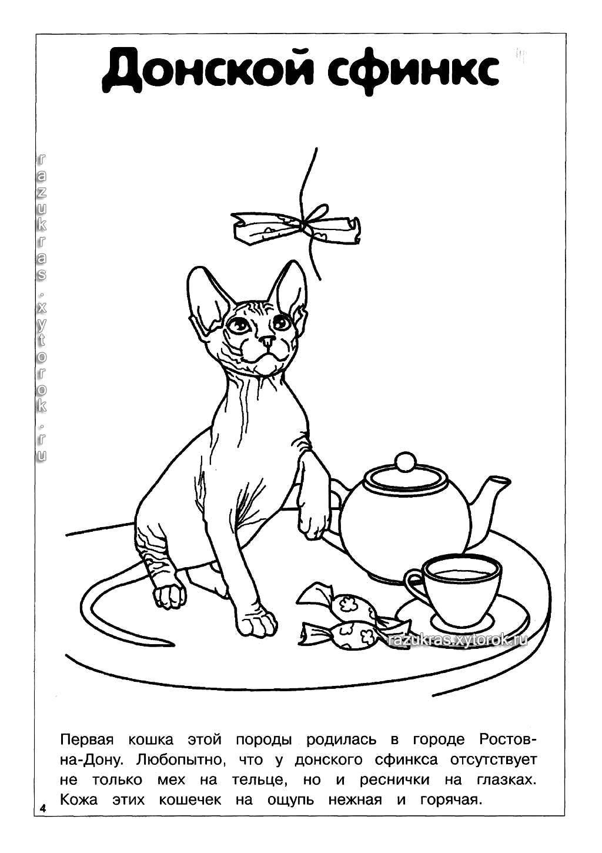 Раскраска Породы кошек Скачать .  Распечатать