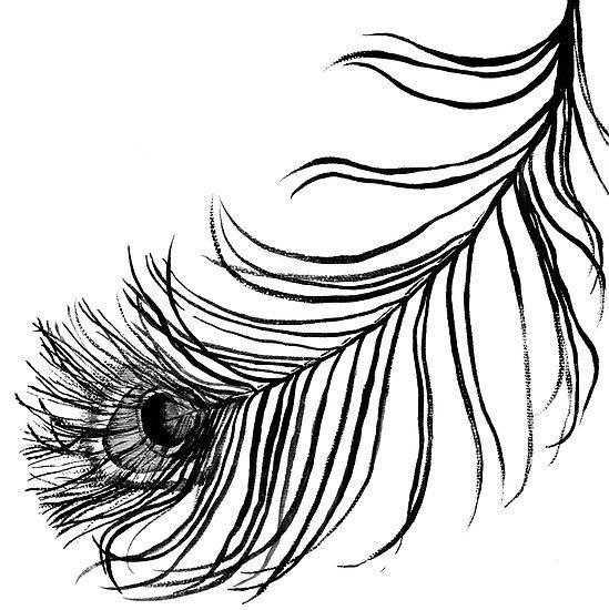 раскраски перо раскраска перо павлина контуры для вырезания