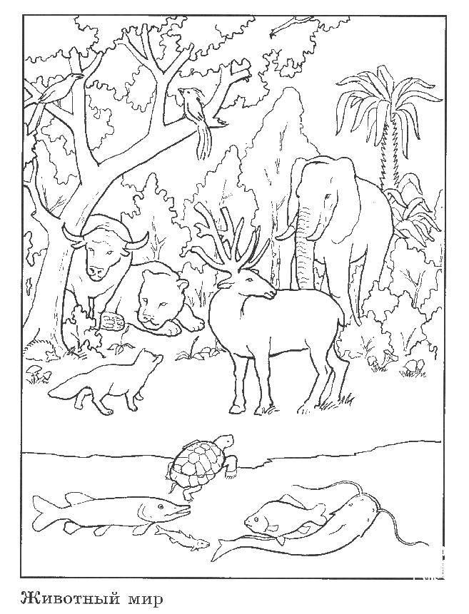 Раскраска Мир животных Скачать животные.  Распечатать ,Животные,