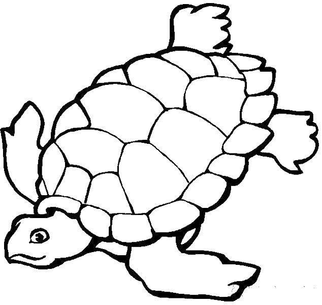 Раскраска рептилии Скачать ,гринч,.  Распечатать