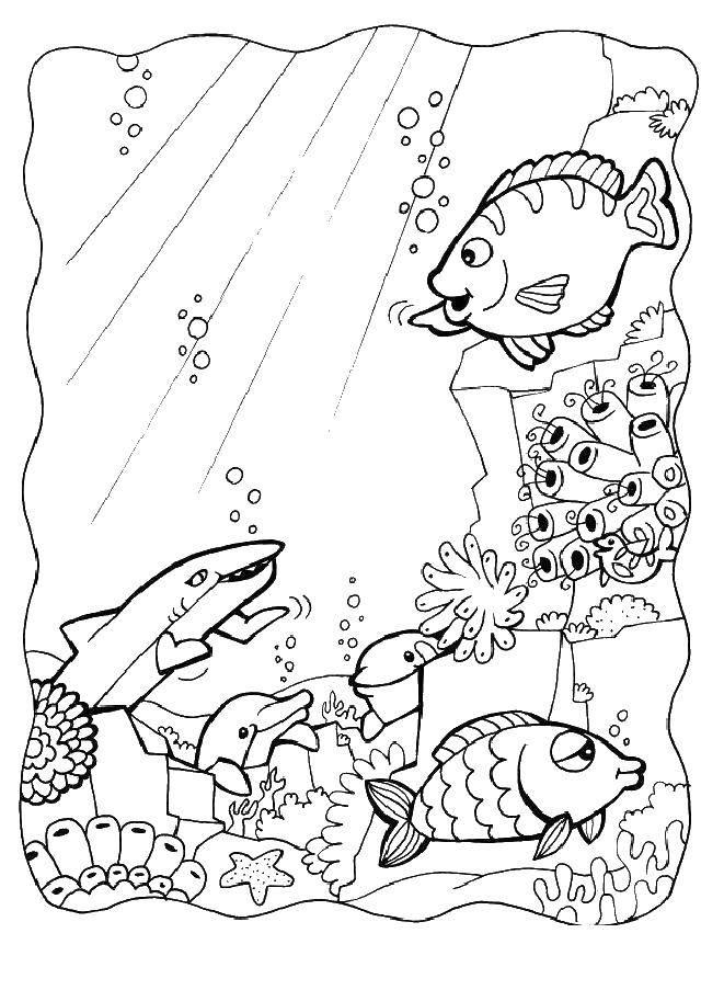 Раскраска Морской мир Скачать море, рыбы, животные.  Распечатать ,морское,
