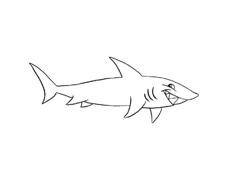 Раскраска Акулы Скачать Дисней, принцесса.  Распечатать ,Диснеевские мультфильмы,