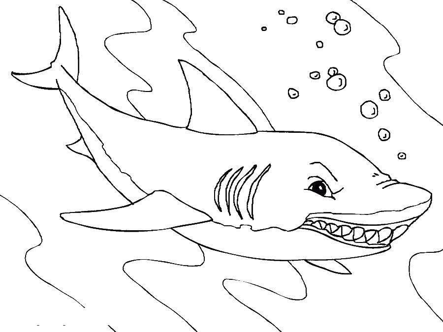 Раскраска морское Скачать Животные, котёнок.  Распечатать ,котики,