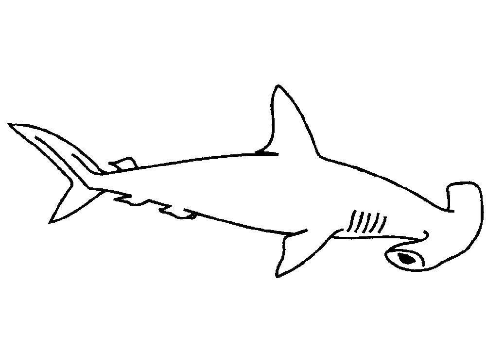 Раскраска Акула молот Скачать Акула, молот.  Распечатать ,Акулы,