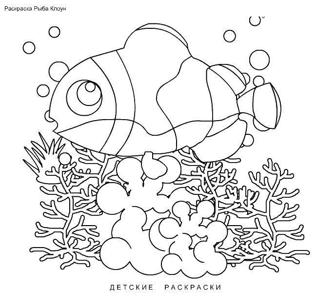 Раскраска рыбы Скачать мультики, кирби.  Распечатать ,Кирби,