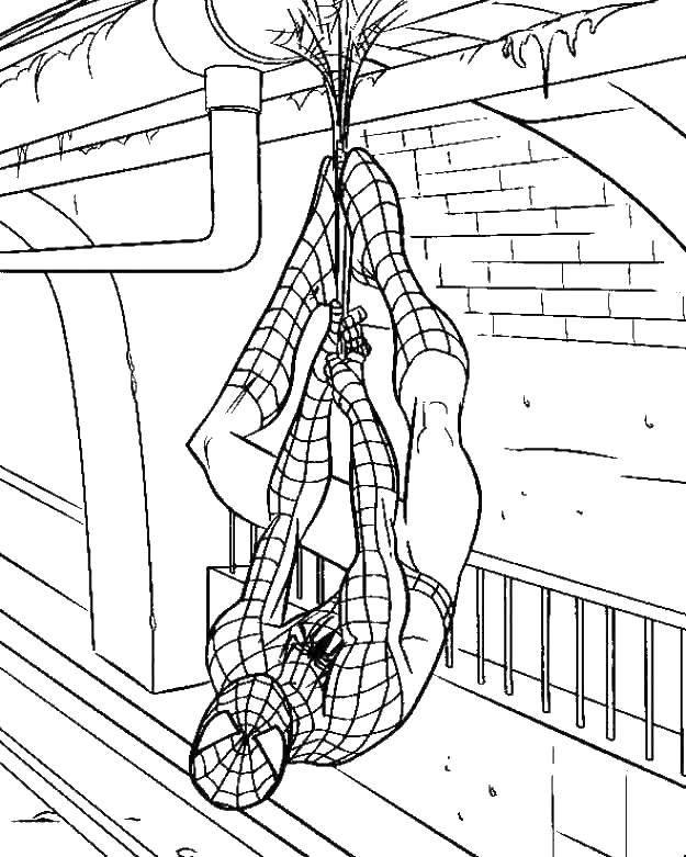 Название: Раскраска Человек паук весит вверх ногами. Категория: человек паук. Теги: человек паук, супергерои.