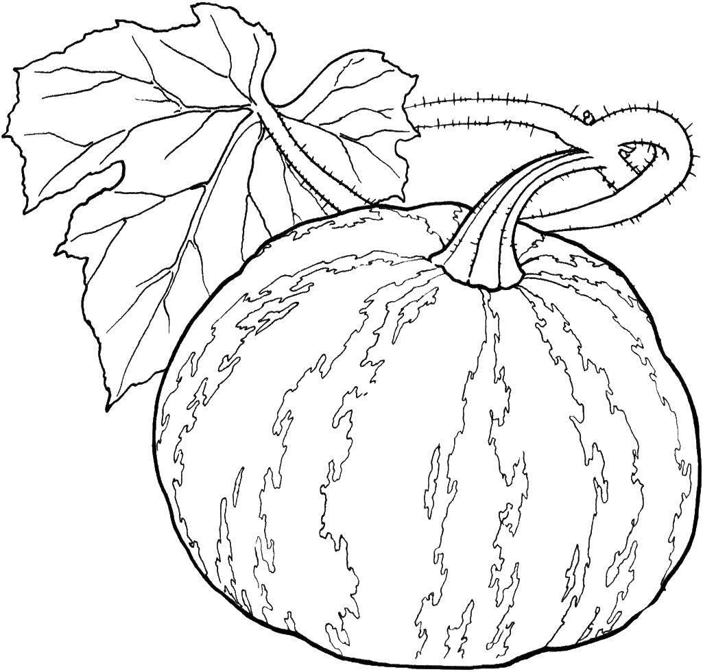 Раскраска Овощи на английском Скачать ,Английский, овощи,.  Распечатать