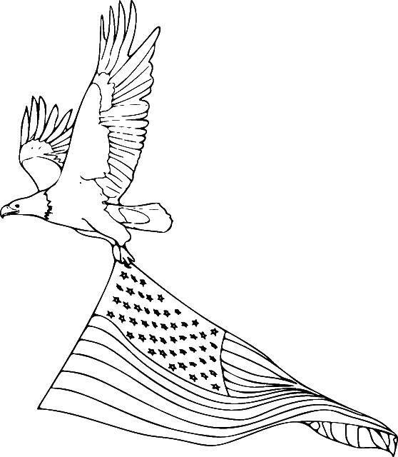 Раскраска Орёл с флагом америки Скачать Флаг.  Распечатать ,Флаги,