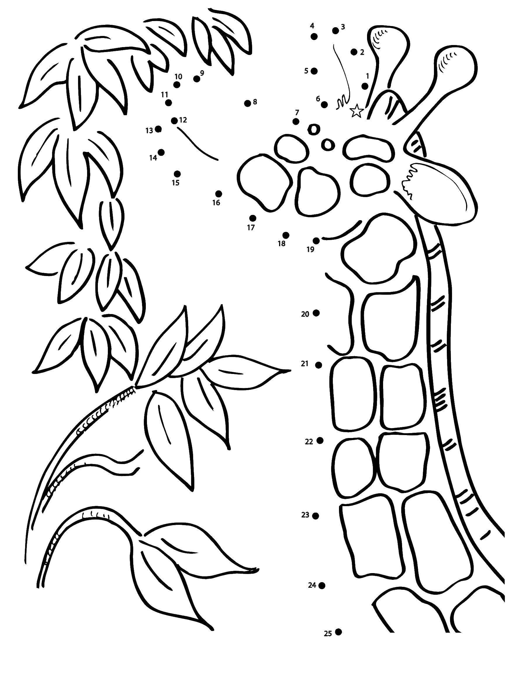 Раскраска нарисуй по точкам Скачать ,мишка, загадка,.  Распечатать