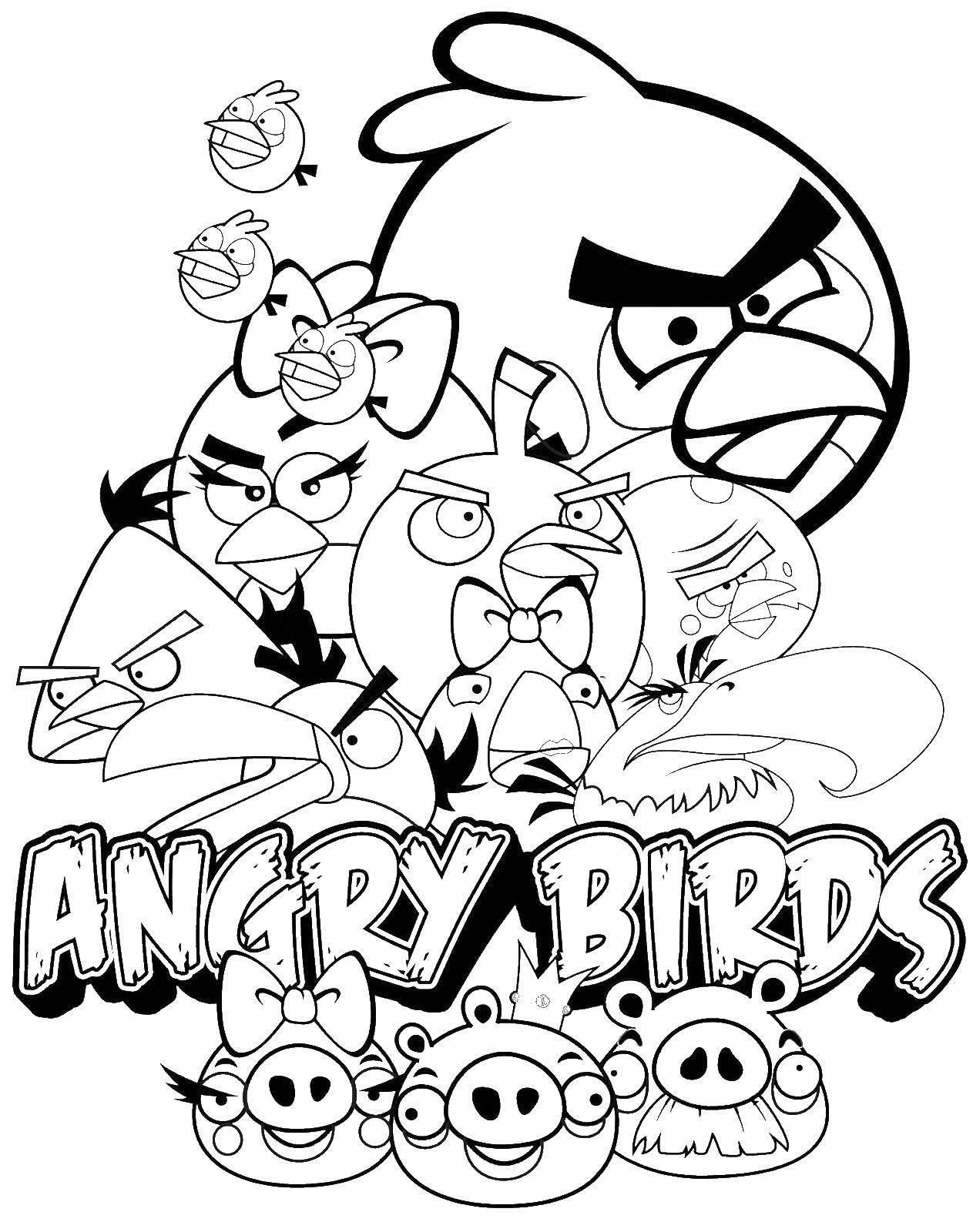 Раскраска angry birds Скачать Животные, свинка.  Распечатать ,Животные,