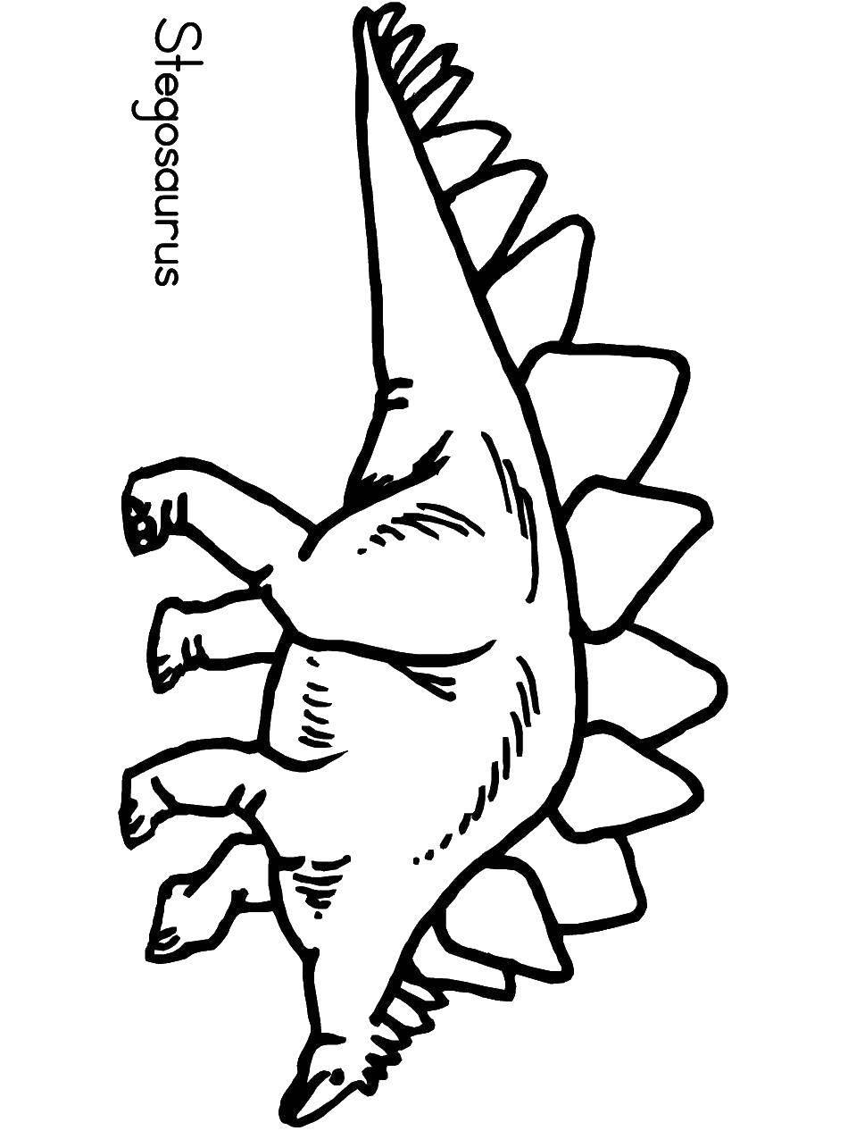 Раскраска динозавр Скачать Птицы.  Распечатать ,Контуры для вырезания птиц,