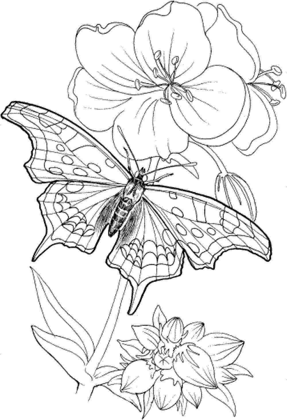 Раскраска бабочка Скачать Аниме.  Распечатать ,аниме,