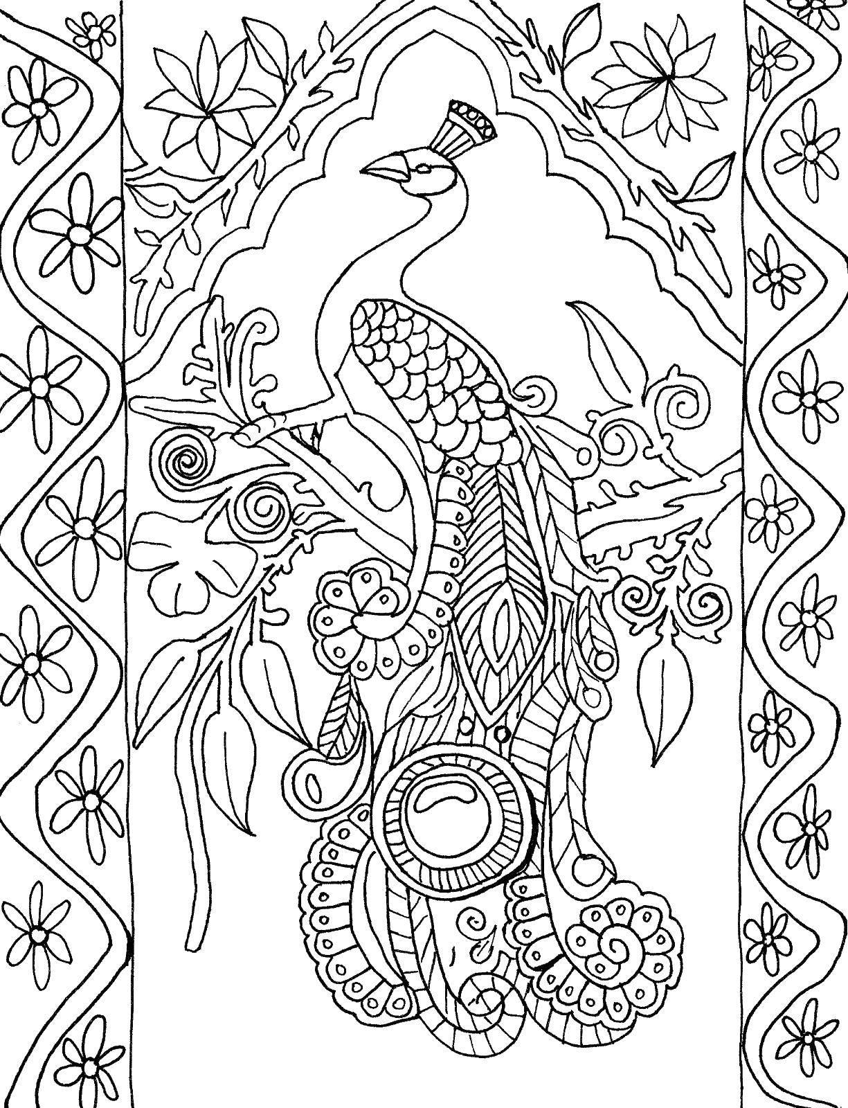Раскраска Павлин с огромным хвостом Скачать Птицы, павлин.  Распечатать ,птицы,