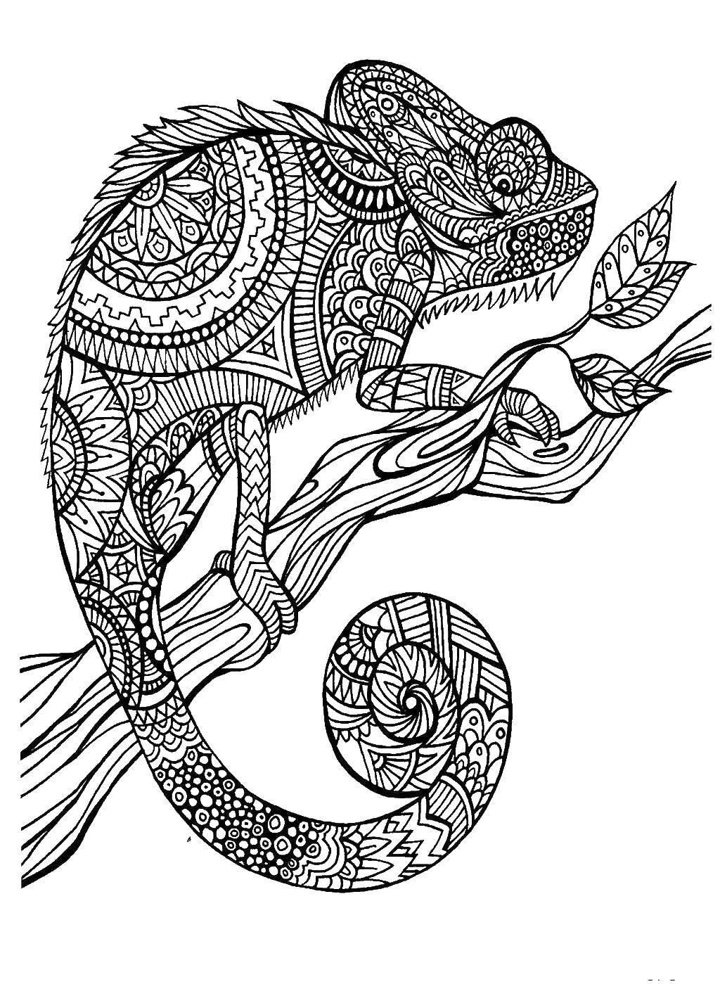 Раскраска Узорный хамелеон на ветке Скачать ,Рептилия, хамелеон,.  Распечатать