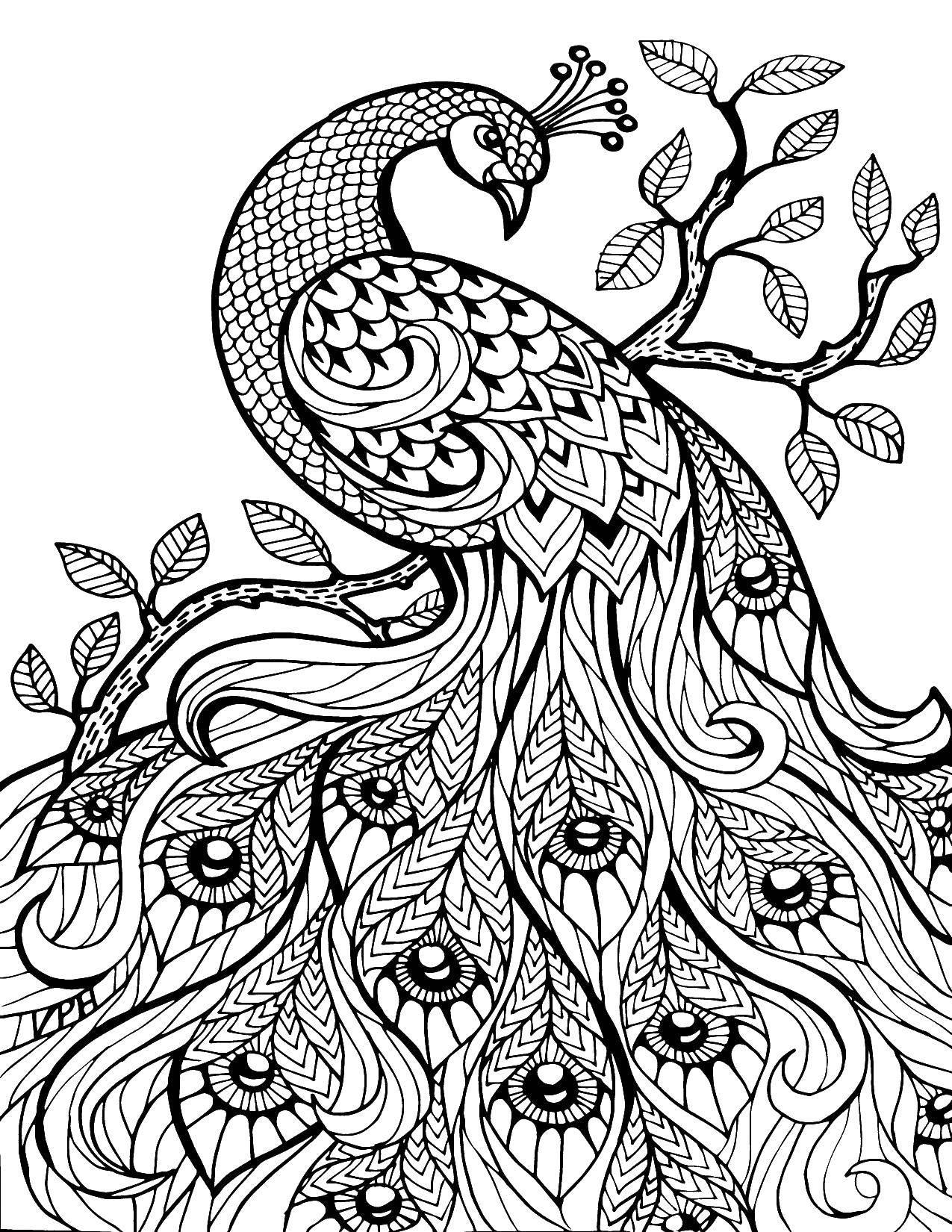 Название: Раскраска Сказочный павлин из узоров. Категория: птицы. Теги: Птицы, павлин.