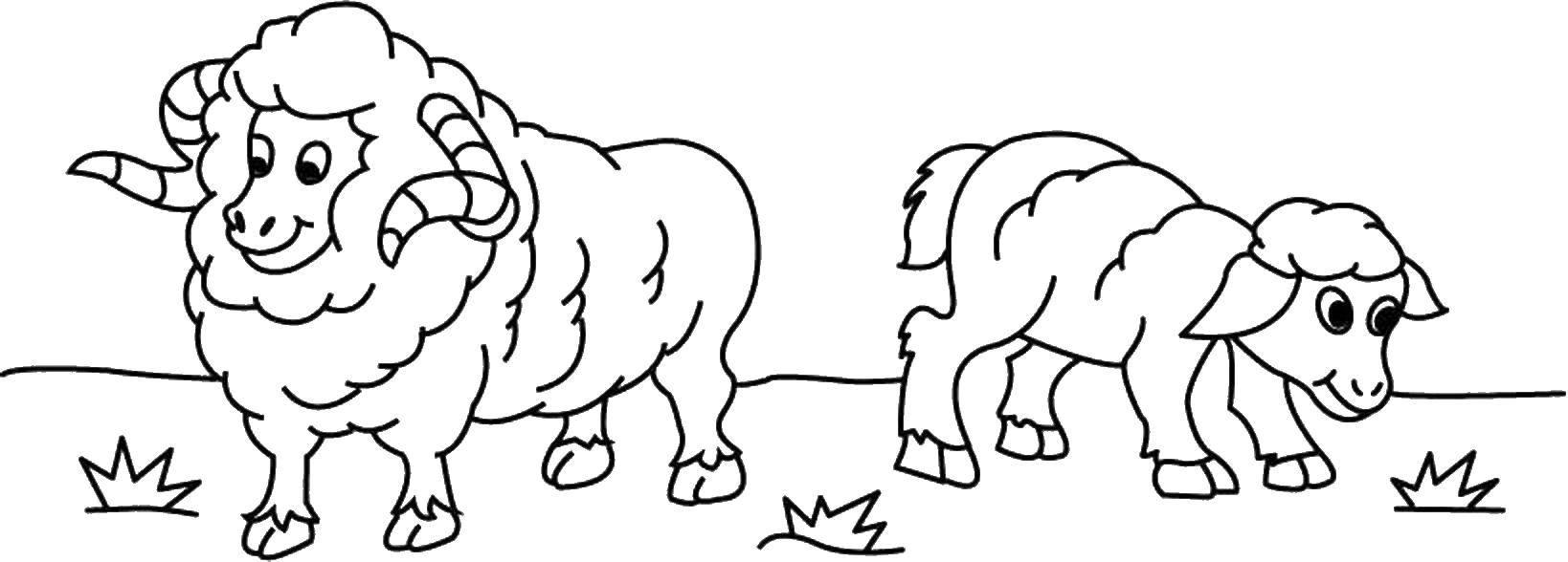 Раскраска Овцы на лугу Скачать овца.  Распечатать ,Животные,