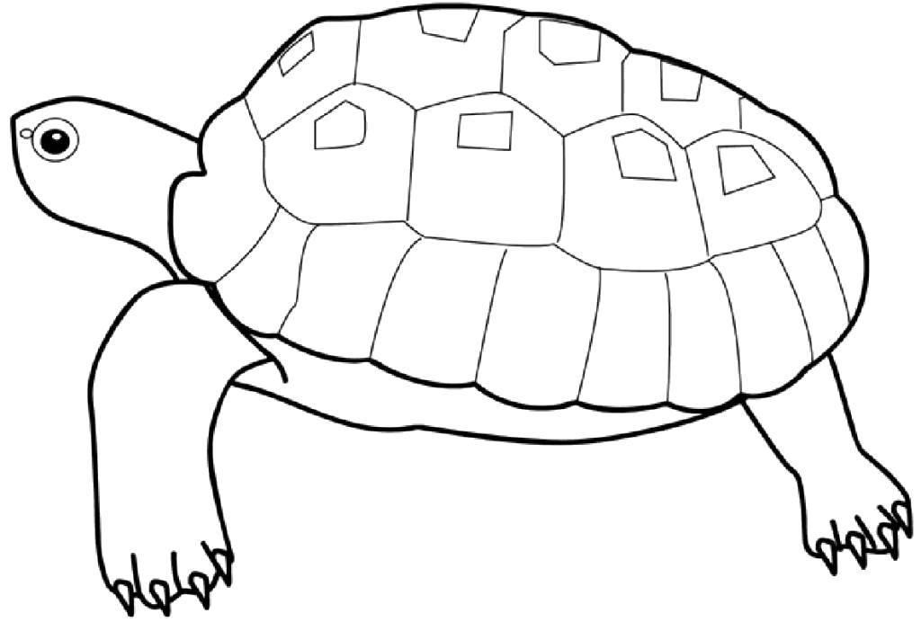 Раскраска рептилии Скачать Хэли, робокар.  Распечатать ,поли робокар,
