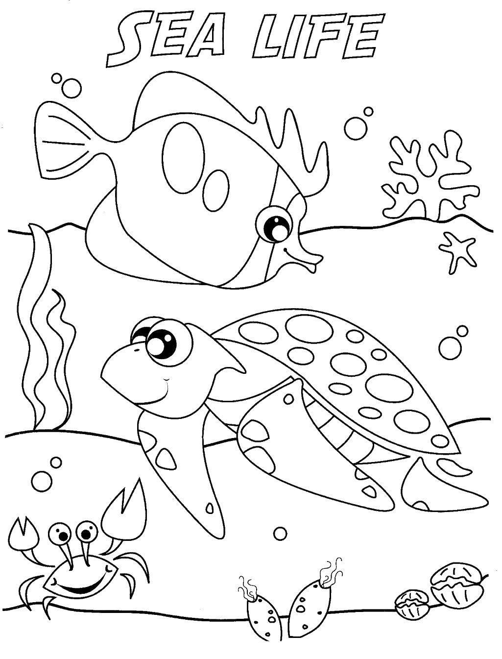 Раскраски морская, Страница:9.