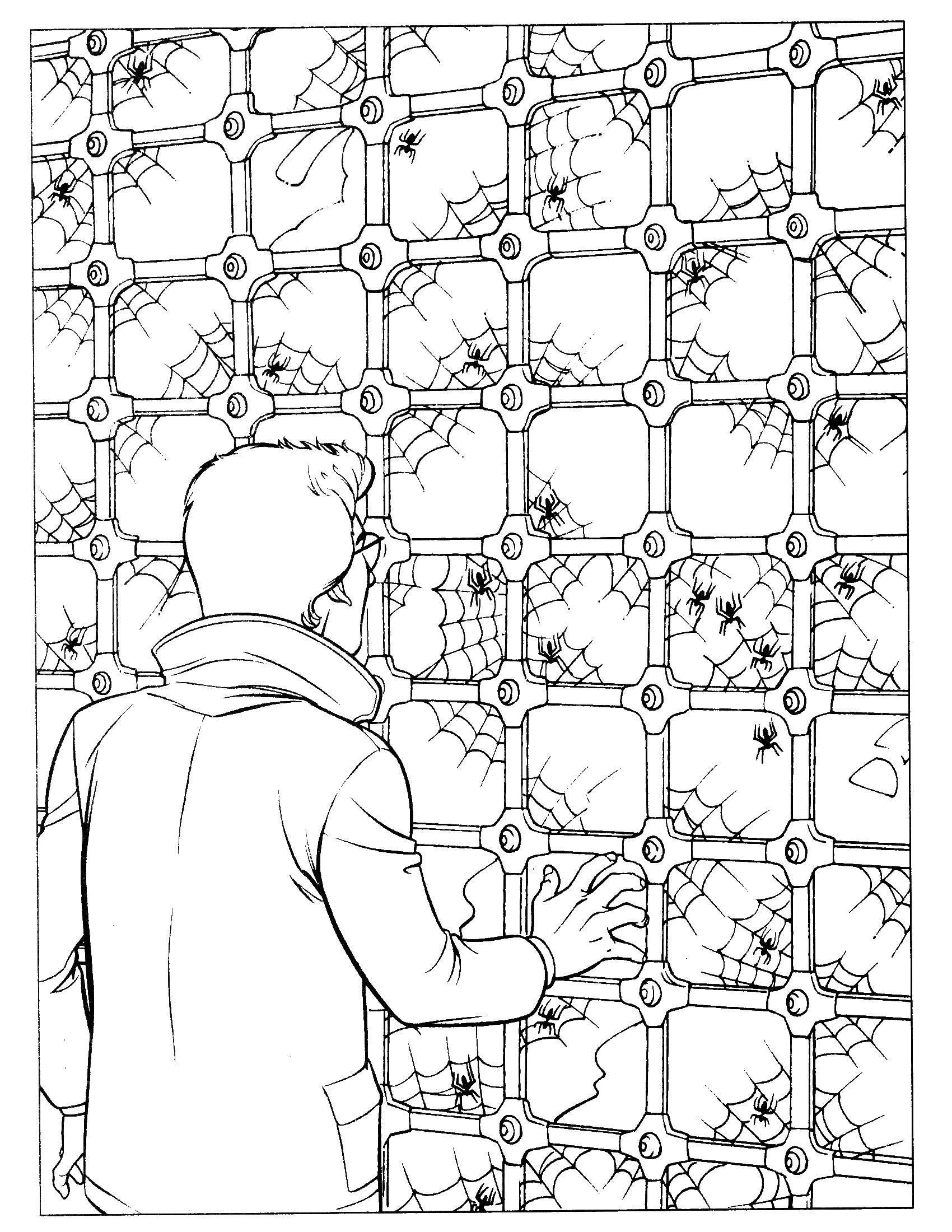 Раскраска Питер паркер человек паук Скачать человек паук, супергерои.  Распечатать ,человек паук,