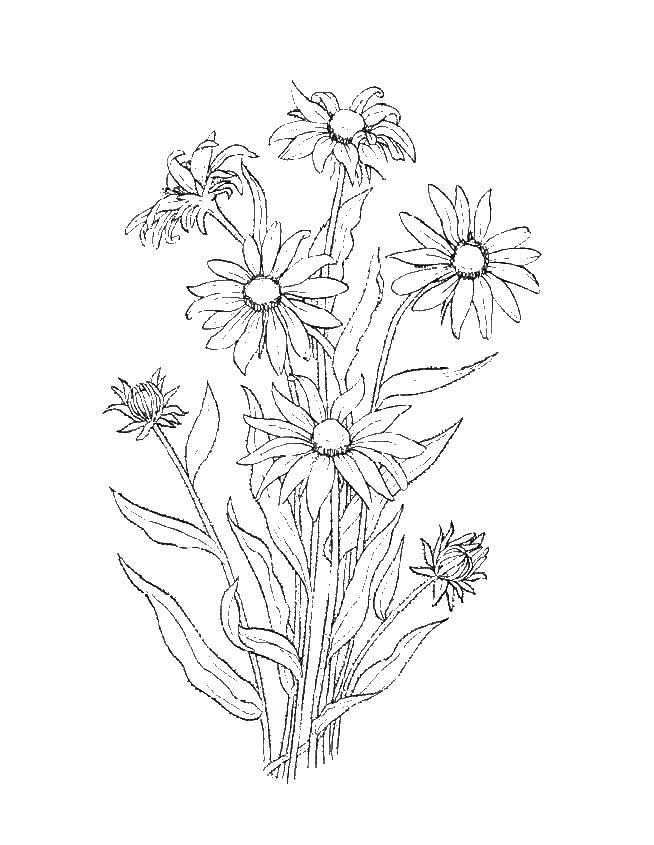 Раскраска цветы Скачать соедини по точкам.  Распечатать ,кунг фу панда,