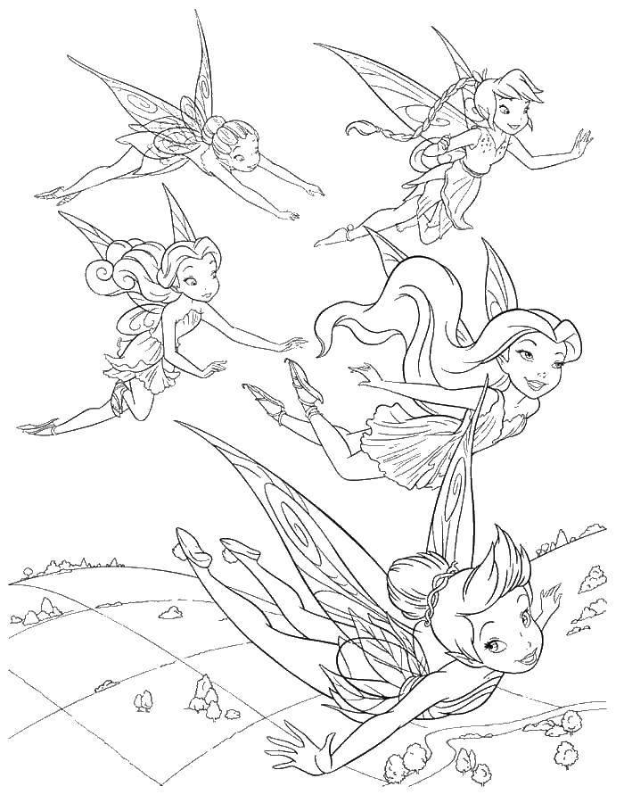 Раскраска Феи подружки летят вместе над лугом Скачать феи.  Распечатать ,динь динь,