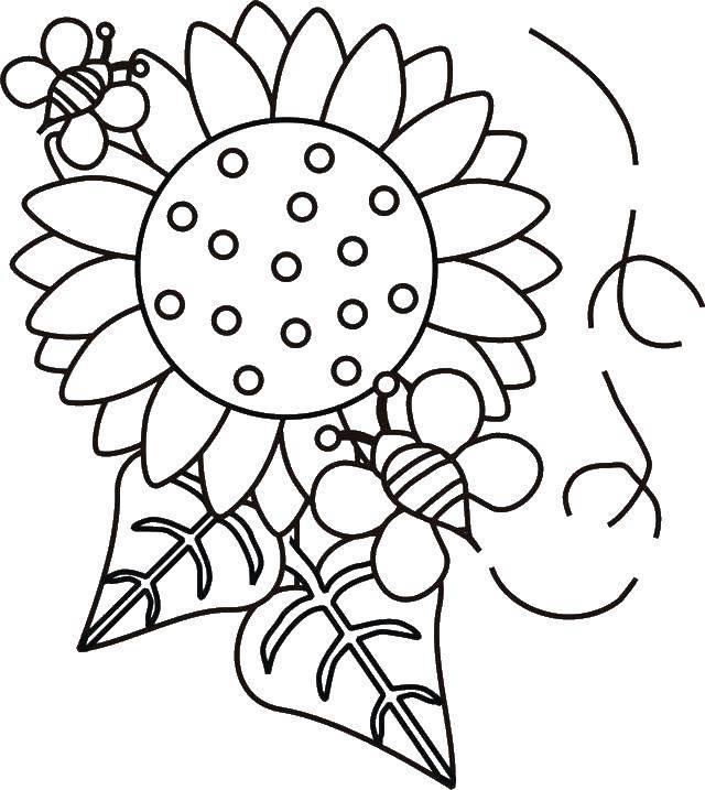 Раскраска цветы Скачать ,Стих,.  Распечатать