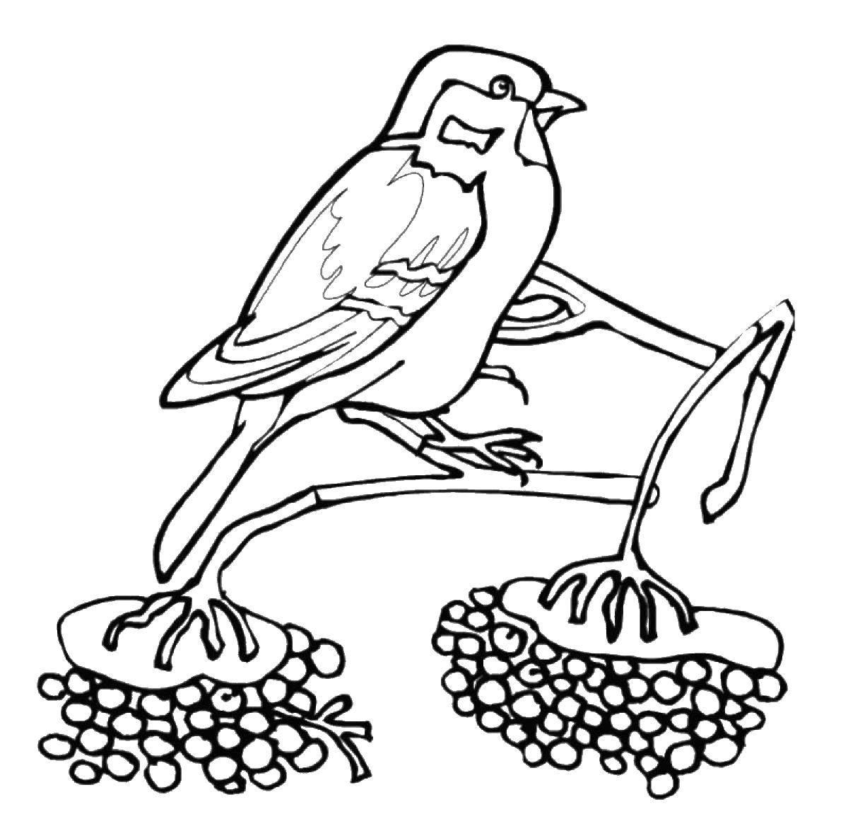 Раскраска птицы Скачать принцессы, дисней.  Распечатать ,Принцессы,
