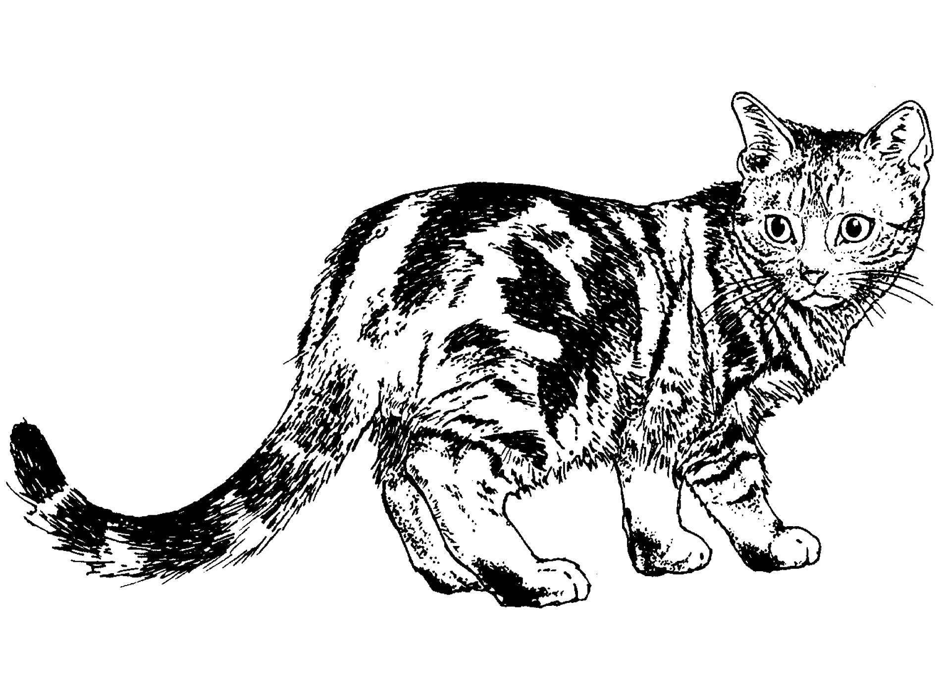 Раскраска Коты и котята Скачать паук, муха.  Распечатать ,Насекомые,