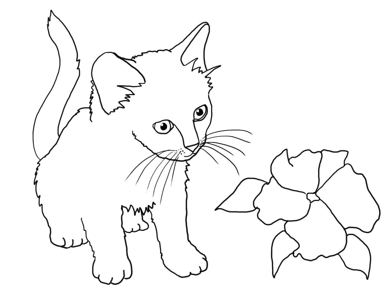 Раскраска Котенок и цветок Скачать животные, котенок, кошка, цветок.  Распечатать ,Коты и котята,