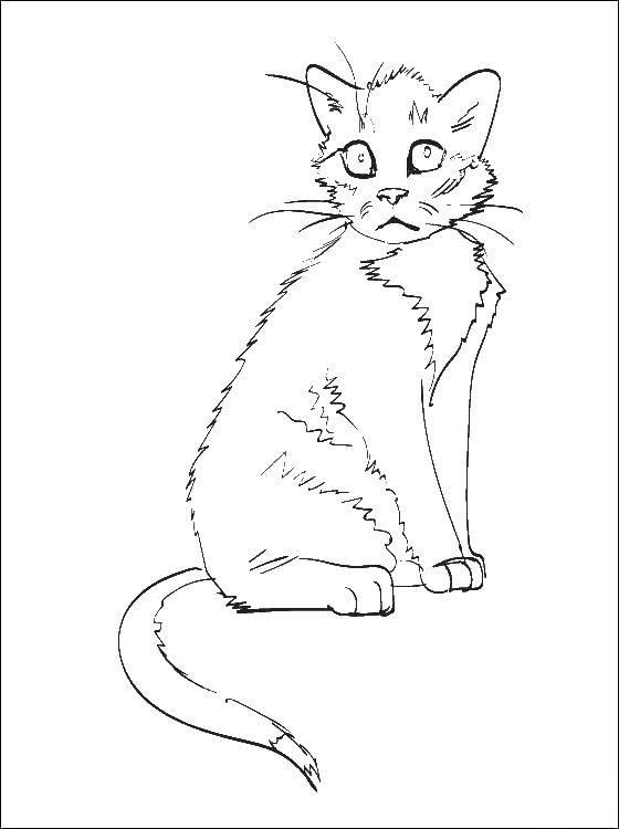 Раскраска Коты и котята Скачать США, Америка, флаг.  Распечатать ,США,