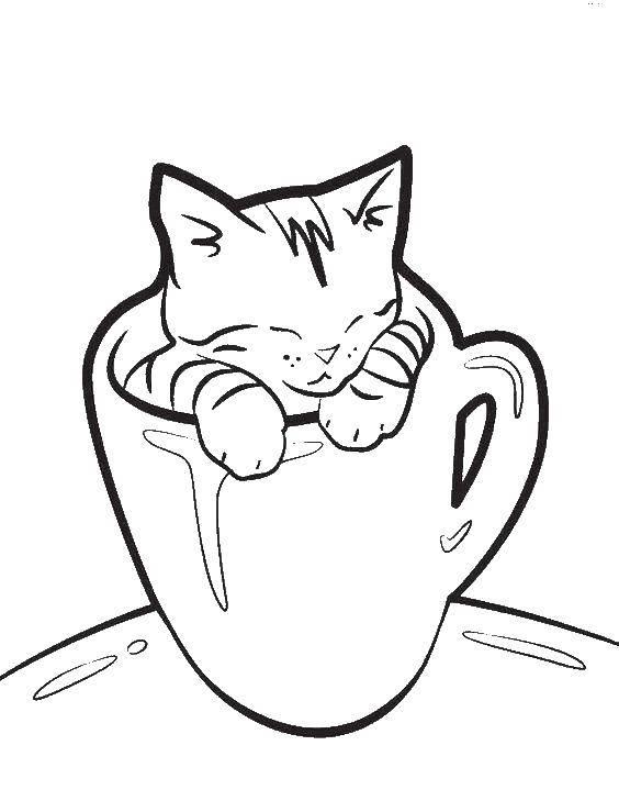 Раскраска Котенок в кружке Скачать животные, котенок, кошка, кружка.  Распечатать ,Коты и котята,