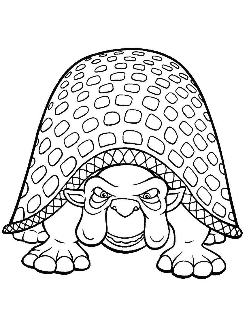 Раскраска Старая черепаха. Скачать Рептилия, черепаха.  Распечатать ,рептилии,