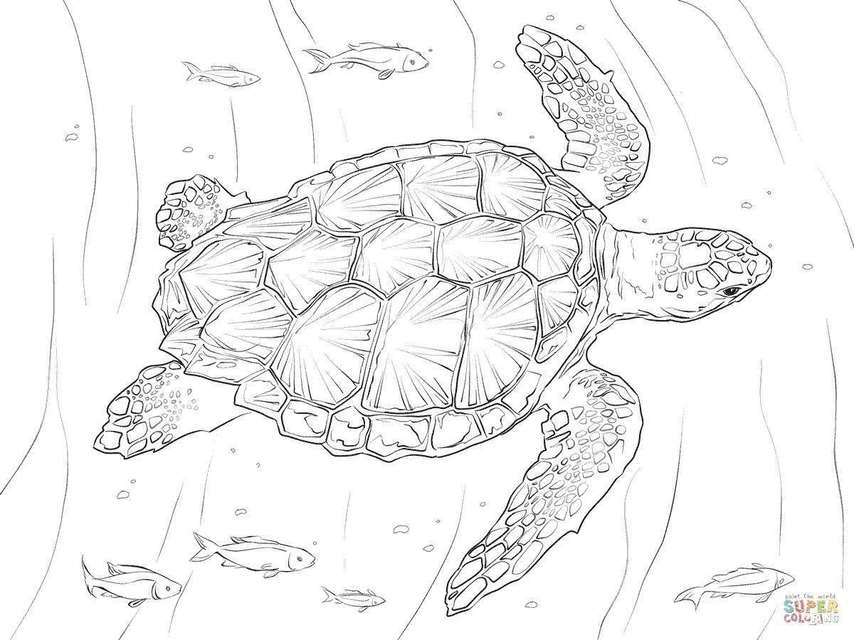Название: Раскраска Морская черепашка. Категория: рептилии. Теги: Рептилия, черепаха.