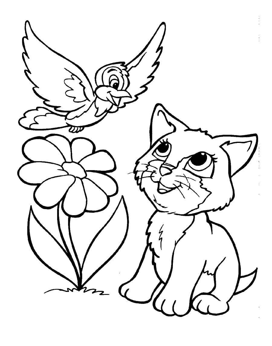 Раскраска Кошечка смотрит на птицу Скачать кошка, кот, птица.  Распечатать ,домашние животные,