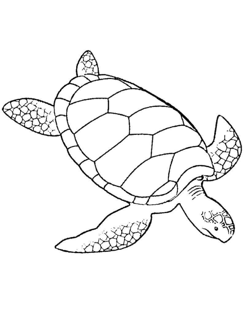 Раскраска морская черепаха Скачать Игры, мозаика.  Распечатать ,игры,