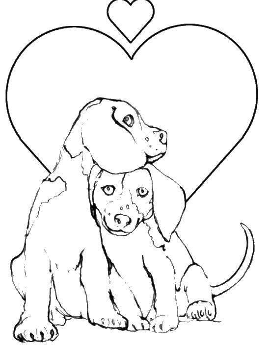 Раскраска Любовь у собачек Скачать животные, собаки, любовь.  Распечатать ,домашние животные,
