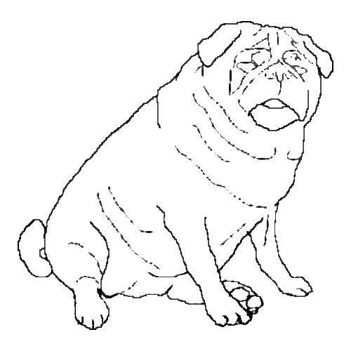 Раскраска Просто толстая собака Скачать ,собака,.  Распечатать